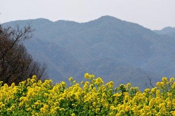 Awaji Hanasajiki Park