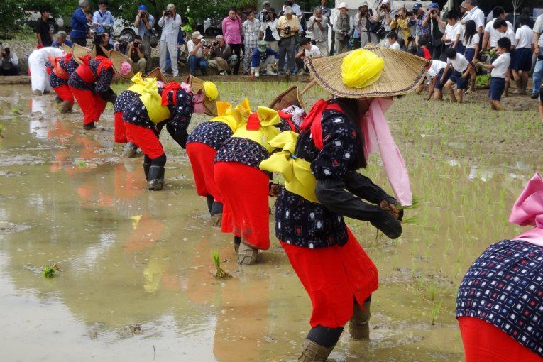 아라오 모내기 축제