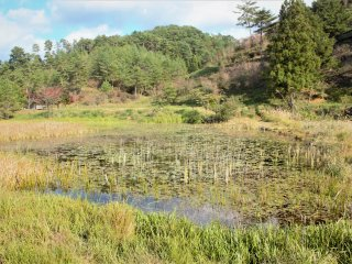 Lilly pads and long grass