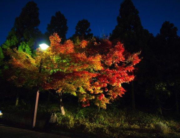 Iluminasi Suzaku no Niwa