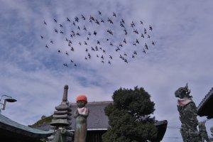 Shikoku Pilgrimage's Mairi Path
