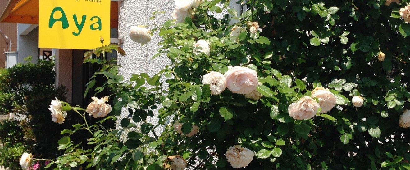 Flowers bloom in May