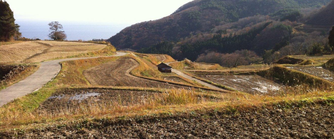 Tanada, les cultures en terrasse de Sado. Certains de ces champs sont encore cultivés par des papis de plus de 80 ans!