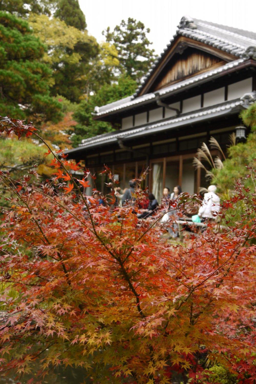 โรงน้ำชาในสวน ท่ามกลางใบไม้เปลี่ยนสี