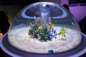 A l'intérieur du Kaiyukan ! Le magnifique aquarium d'Osaka