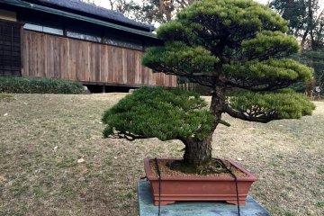 สวนส่วนในของศาลเจ้าเมจิ จินกุ