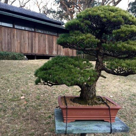 Vườn nội cung Meiji Jingu