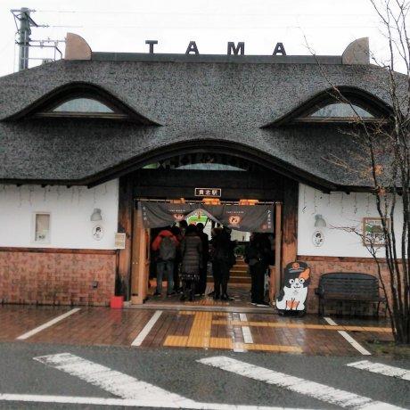 สถานี kishi สถานีแมวเหมียว
