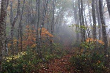 Shinetsu Trail, Part 2
