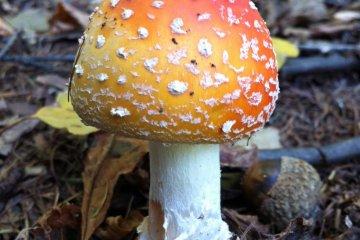 a fun guy...  mushrooms were everywhere on the trail