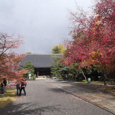 Koryu-ji Temple in Kyoto