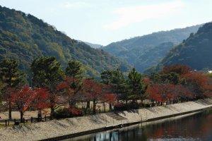 일본 차의 수도, 우지의 언덕