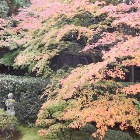 Keishunin Temple