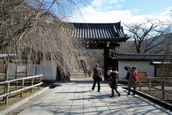 ประตูวัดและต้นซากุระ ในปลายเดือนพฤษจิกายนต้นซากุระทิ้งใบไปกันจนหมด แต่ในเดือนเมษายนสีชมพูจะมาครอง