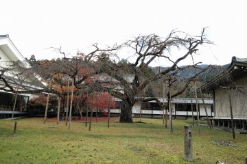 เขตซานโบะอิน ของวัดไดโกะจิ เกียวโต