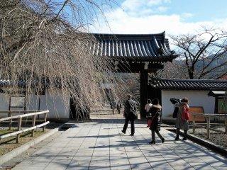 ประตูวัดส่วนหน้าและต้นซากุระในฤดูใบไม้ร่วง
