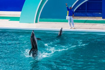 The dolphins appear to dance on the water