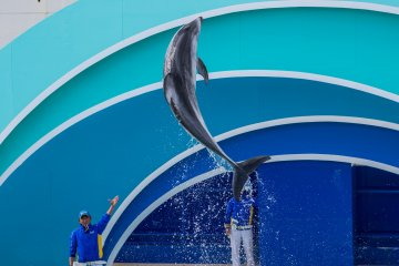"""The incredible speed of the dolphins allows for some serious """"hang time"""""""