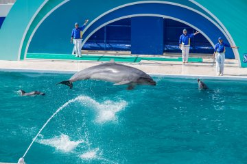 The acrobatic talent of the dolphins is impressive