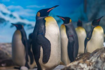 Penguins relaxing together in their exhibit
