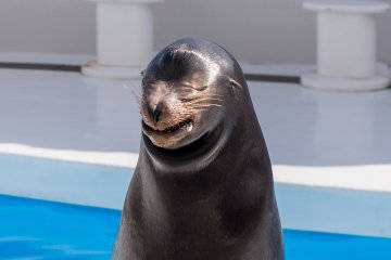 You can take a picture with a smiling sea lion!