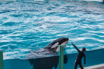 One of the whale trainers works with her friend