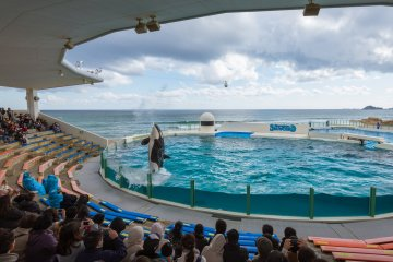 The killer whale has been trained to spit water into the air