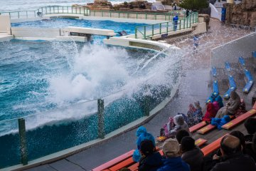 This whale sure knows how to make a splash!