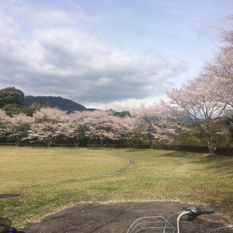 Le Parc Hoihoi Hiroba à Mizukami