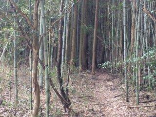 竹林を散策