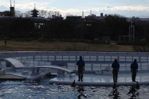 Dolphin tank with Kyoto skyline