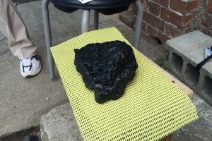 メタセコイヤが3500~7000万年の月日を経て石炭となる