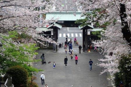 Sakura di Ikehami Honmon-ji