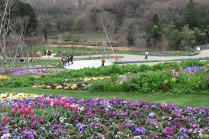 10,000 Square Meter Flower Bed, Satoyama Garden