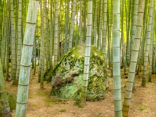 One last walk through the bamboo forest before returning to civilisation