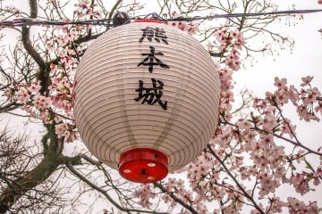 A lantern contrasting against the pink leaves