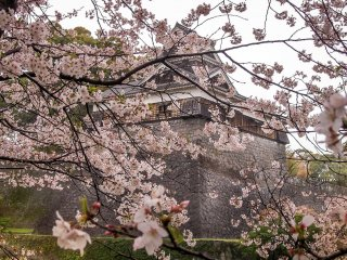 A castle tower covered in a colorful blanket of cherry blossoms