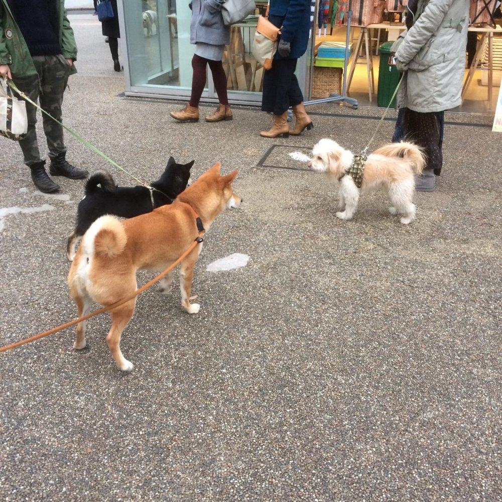 Khu phố Daikanyama rất thân thiện với những chú chó. Đây là một nơi tuyệt vời cho những công dân nhiều lông nhất của Tokyo