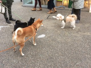 A very dog-friendly neighbourhood, Daikanyama is a great place to spot Tokyo's fluffiest residents