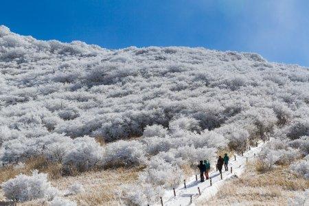เส้นทางเดินป่ามะคิโนะโตะ ท่ามกลางหิมะ
