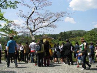 Wisatawan di Kuil Kinkakuji