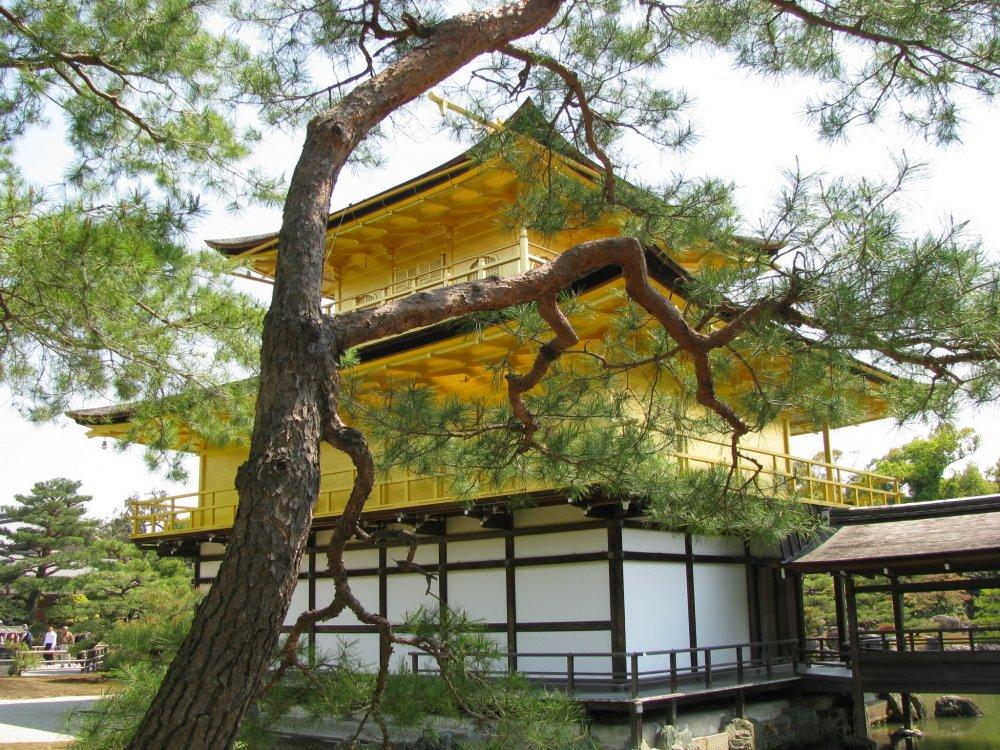 Kuil Kinkakuji dikelilingi pepohonan dan taman indah