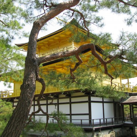 Tinh thần Kyoto
