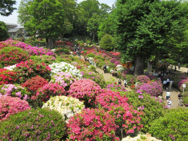 Grand view of the azalea garden