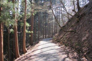 Лесная тропа в парк обезьян Дзигокудани Яэн Коэн