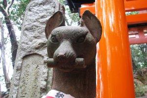 Kitsune is the messenger of Inari