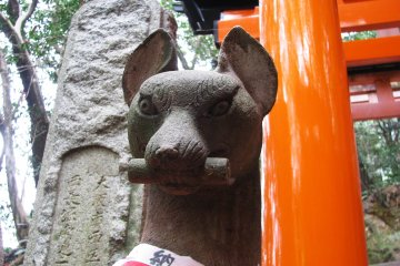 The Top of Fushimi Inari Taisha