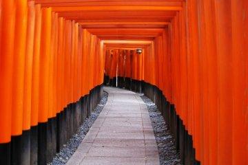 Mysterious corridor of torii