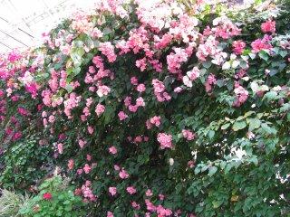 Les arbustes avec des petites fleurs