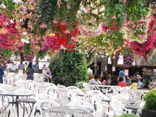 La zone qui abrite le Café est aussi remplie de fleurs